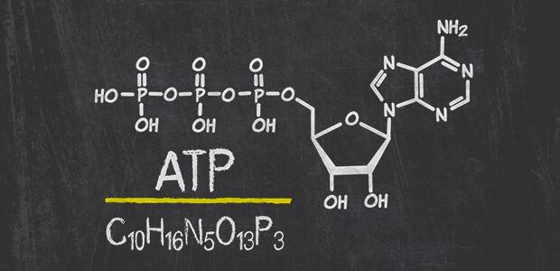 ATP(アデノシン三リン酸)とは何者?