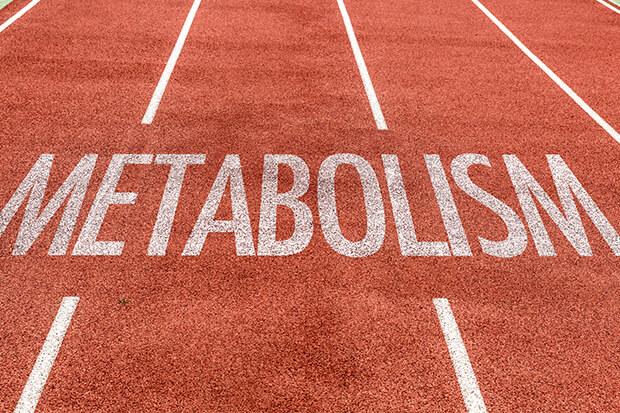 新陳代謝と基礎代謝の違い