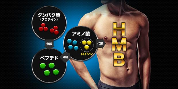 ロイシンの代謝物がHMB