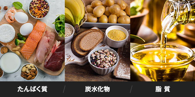 3大栄養素「たんぱく質」「炭水化物」「脂質」