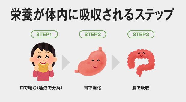 ①口で噛む(唾液で分解) → ②胃で消化 → ③腸で吸収